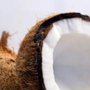 coconuts_fi