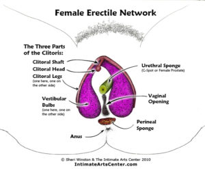 female-erectile-network-labels-color-web_v2