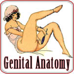 Genital Anatomy - Think you really know?