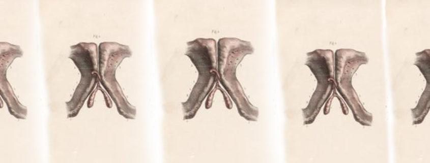 bourgery-female-anatomy-fi