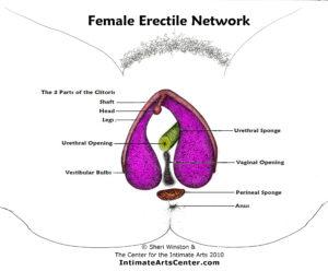Erectile Network - labels-color