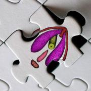 erectile-network-puzzle_v2